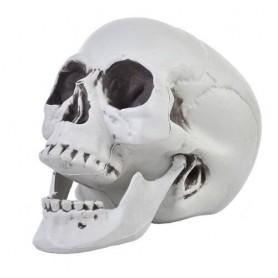 Skull life size - 20cm